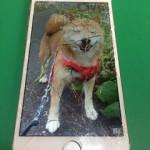 【修理実績No.61】iPhone6のフロントパネルガラス割れ